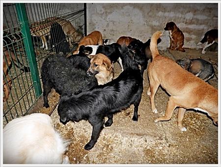 honden in de kerkers van het asiel