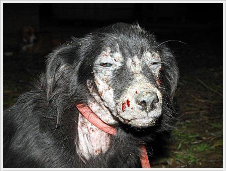 Wat een pijn en verdriet voor dit dier